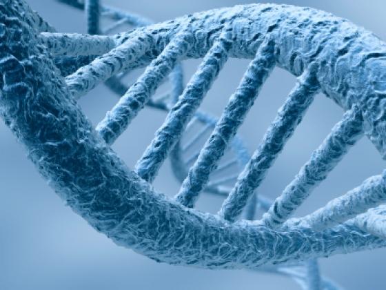 Patentando el ADN