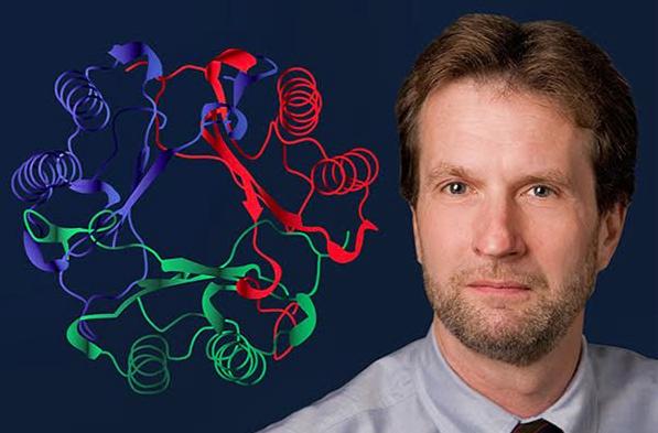 ¿SABÍAS QUE…?  Encuentran proteína clave que detona el Lupus y otras enfermedades autoinmunes