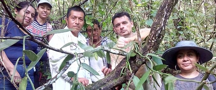 Al rescate de la vainilla mexicana