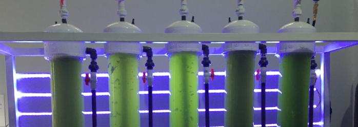 Obtienen biodiesel de algas