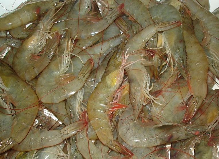 Transfiere Centro Conacyt tecnológica a granjas de Vietnam para explotación de camarón