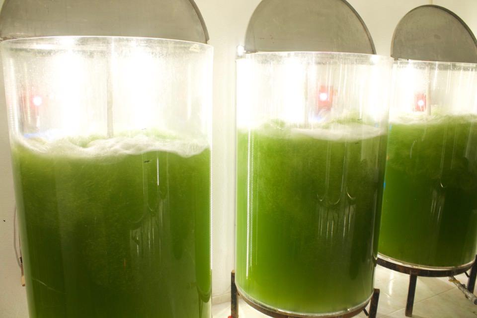 16oct03-antimio-cb-patentan-biocombustible-con-microalgas-foto-01
