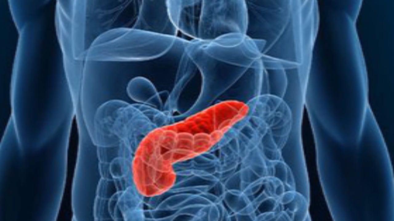 16oct12-antimio-cb-07-antidiabetico-mexicano-foto-2-pancreas-imagen