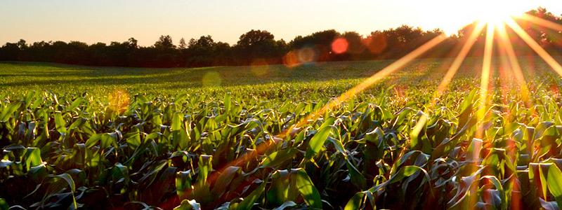 Agroecología e innovación campesina en el cultivo del maíz