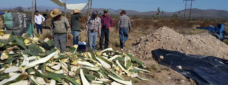Bioconversión de biomasa vegetal para uso industrial