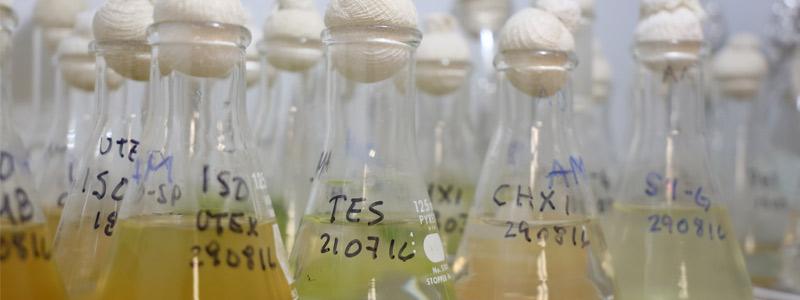 Energía verde: biocombustible de microalgas