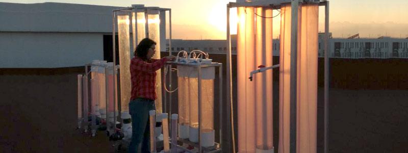 Nueva generación de superalimentos a partir de microalgas