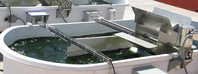 Investiga UNAM tratamiento de aguas para producir biocombustibles