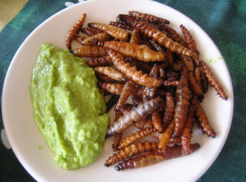 La desmedida recolección de insectos comestibles podría dañar la biodiversidad