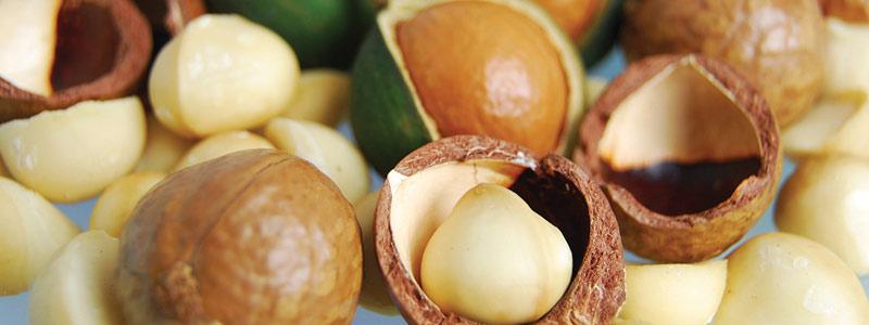 Conoce los potenciales de la nuez de macadamia
