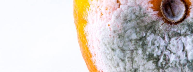 Nanotubos fotoactivos para atacar el moho gris de la fruta