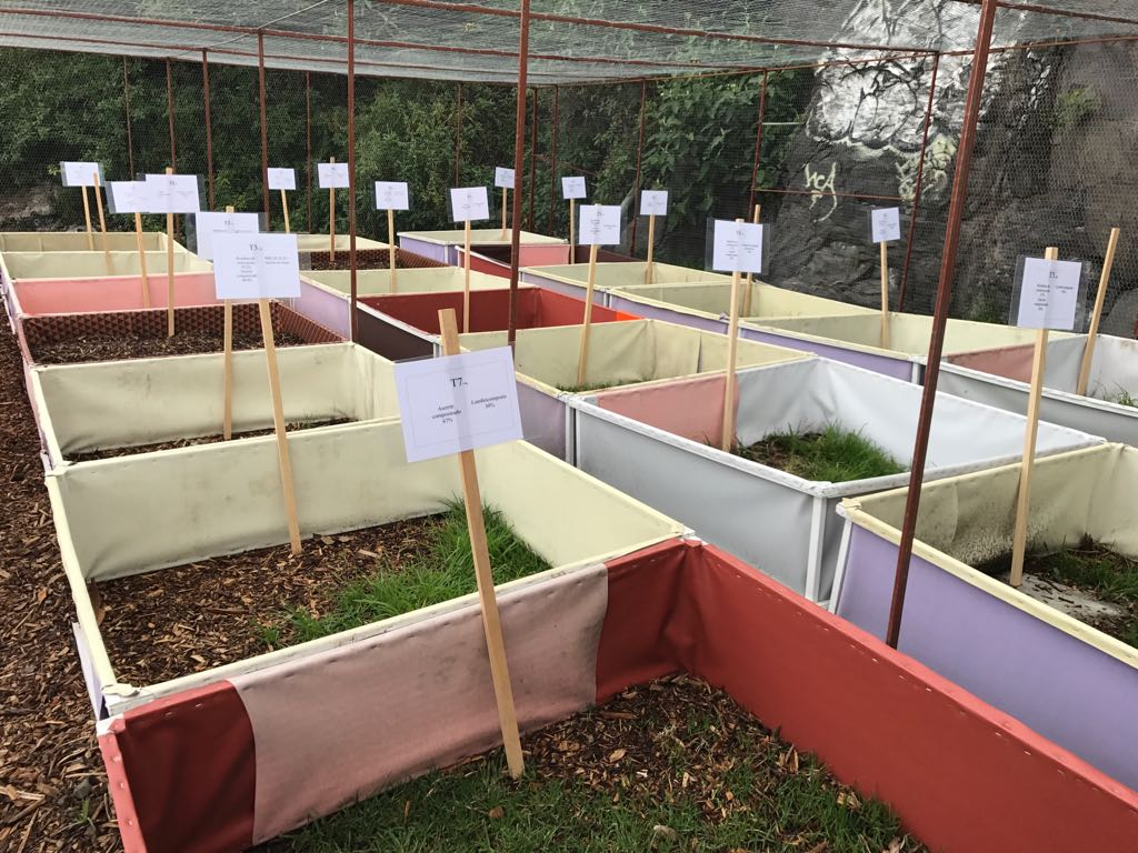 Transforman cascajo y composta para elaborar suelos fértiles