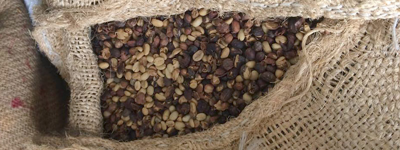 Ciencia gourmet: café y cacao mejorados