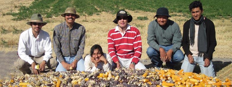 Ciencia gourmet con maíz mejorado