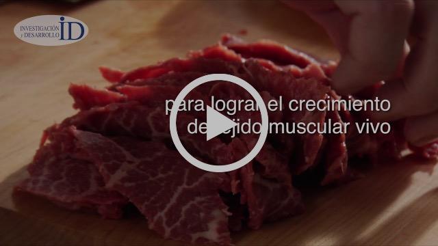 Crean diez mil kilos de carne con una sola célula de vaca