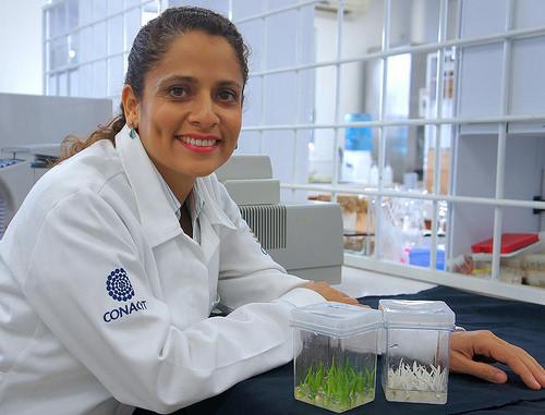 Por la obtención de agave blanco en laboratorio premian a científica mexicana