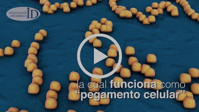 Científicos mexicanos reparan órganos con esponjas de colágena