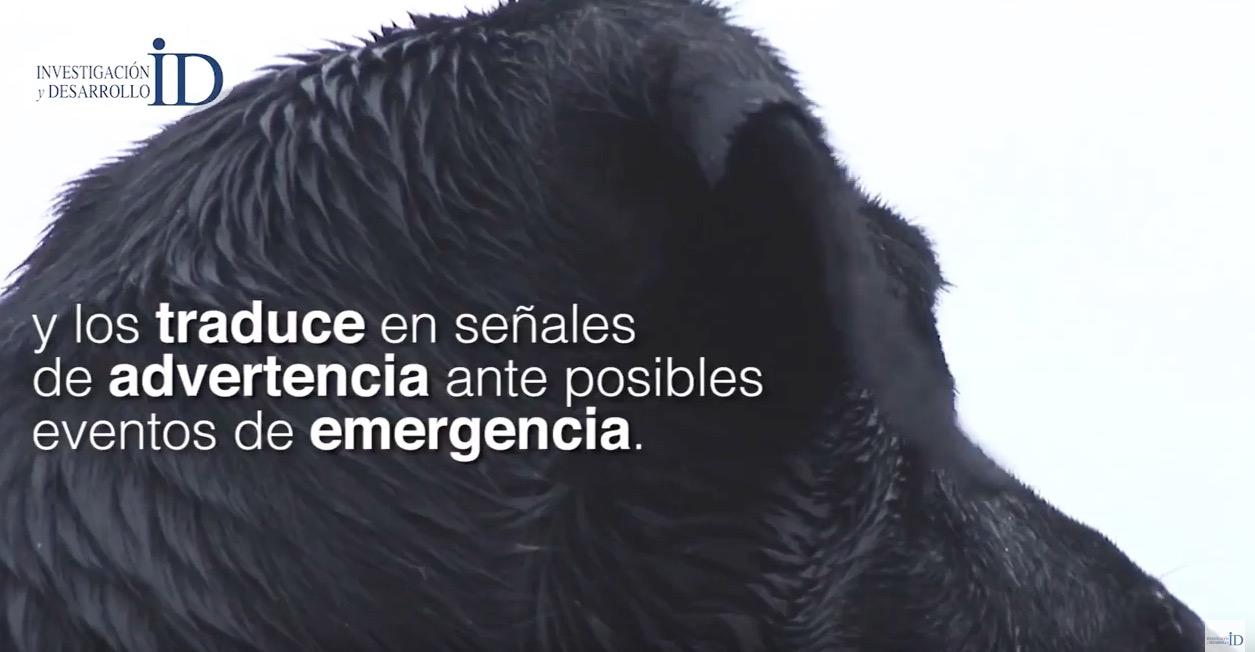 Crean investigadores mexicanos sistema que interpreta ladridos