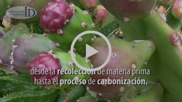 Con desechos de tuna, brócoli y agave investigadores limpian 100% aguas residuales