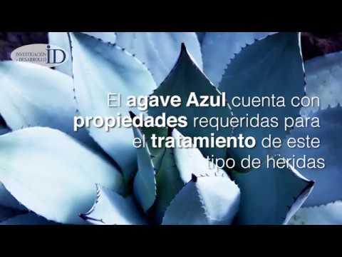 A partir de agave, investigadores mexicanos crean biopiel para tratar quemaduras graves