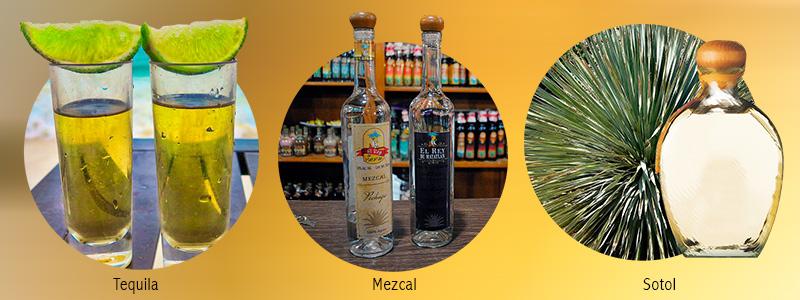 Tequila, mezcal y sotol: la defensa científica de lo nuestro