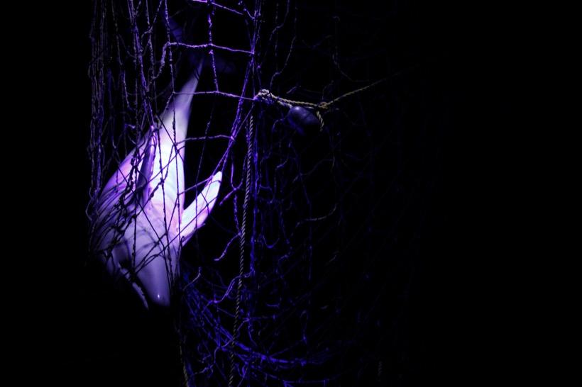Vaquita marina, historia de extinción que no debe repetirse
