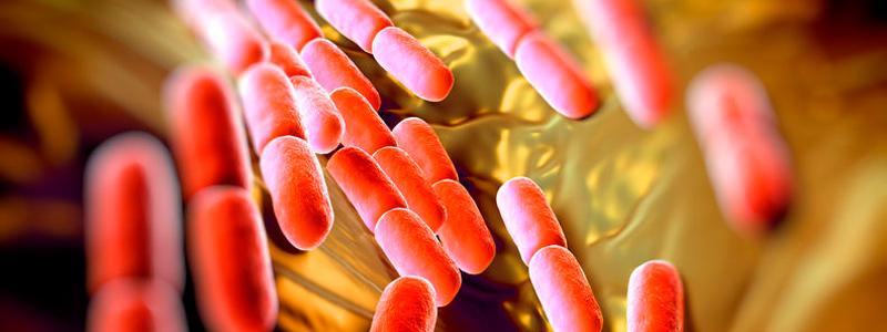 Nuevos probióticos en la dieta