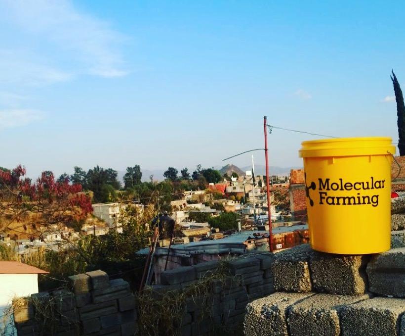 Mexicanos proponen Granjas Moleculares para combatir la desnutrición