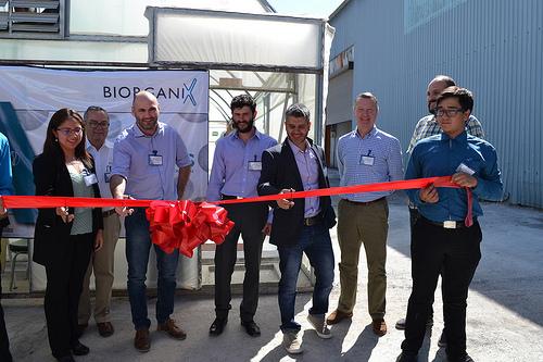Lanza consorcio México-británico bioestimulante agrícola de alto valor a partir de microalgas