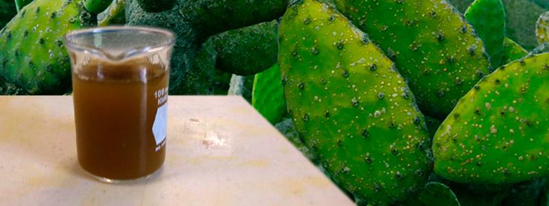 Nuevos materiales con residuos del nopal