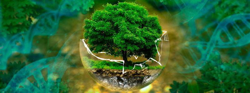 Segundo foro en salud, medio ambiente y nuevos materiales