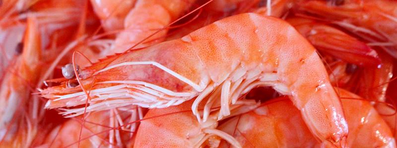 Investigadores oaxaqueños desarrollan portón de arrastre para pesca de camarón