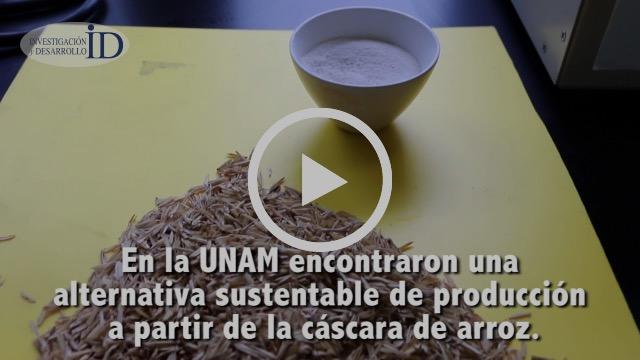Obtienen investigadores de la UNAM posible sustituto óseo a partir de cáscara de arroz