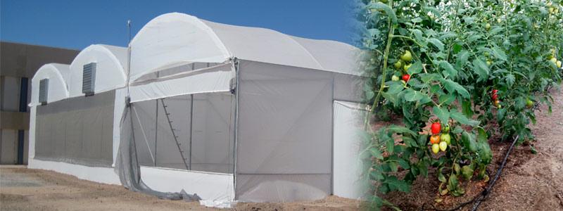 Climatizan invernaderos de pepino y tomate con energía geotérmica