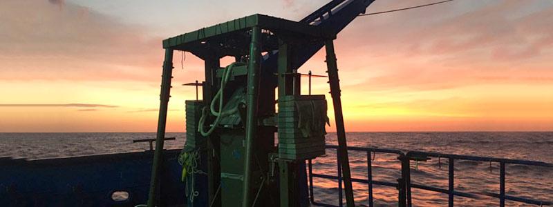 Microorganismos que degradan petróleo hallados en el golfo de México