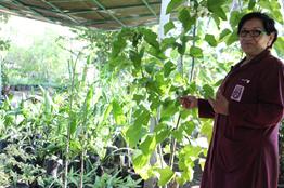 Desarrolla IPN especie vegetal para usarse en alimentos y medicinas