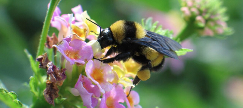 Internet de las cosas para apicultura de precisión